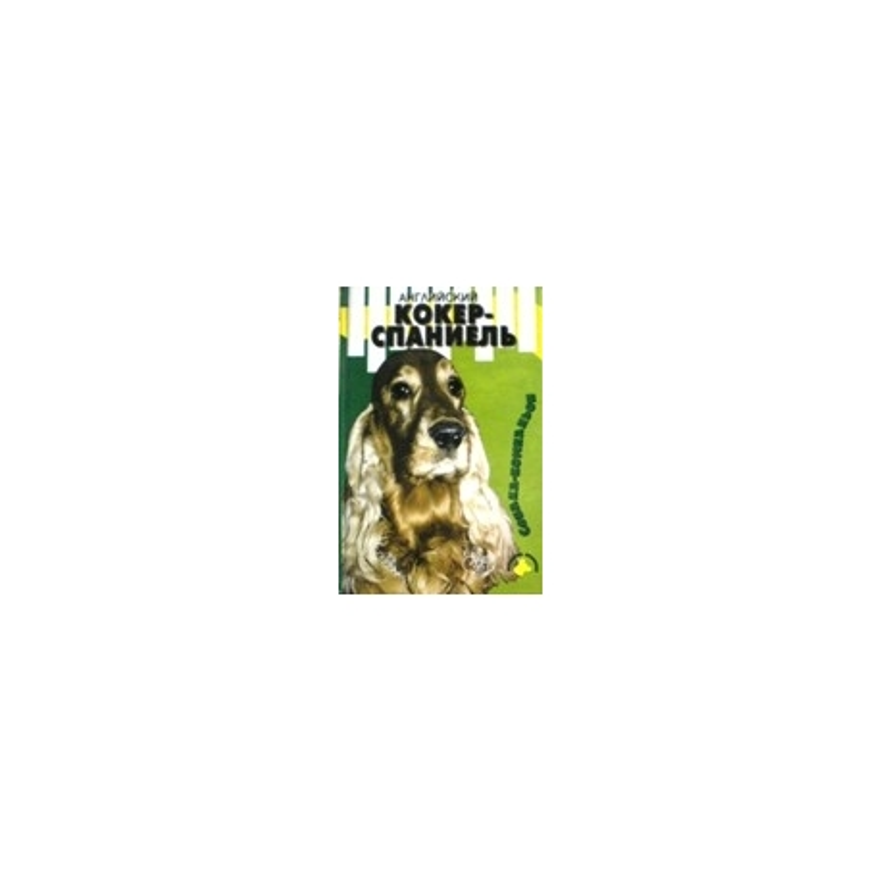 Английский кокер-спаниель: Собака-компаньон.
